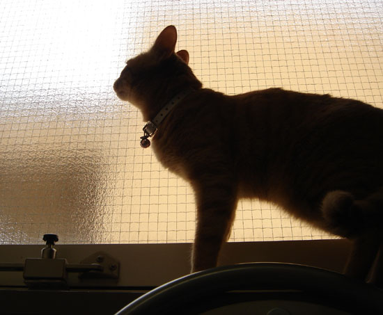 猫のまつげ