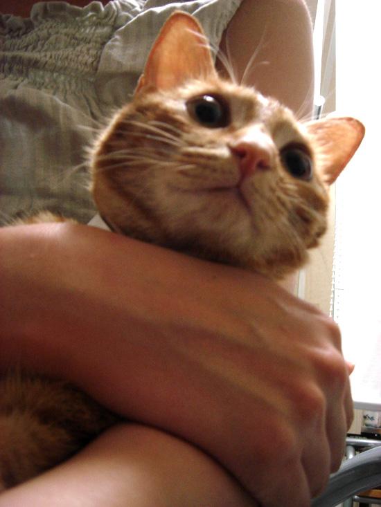 ネコの抱き方