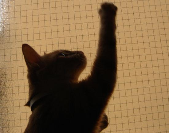 猫逆光写真