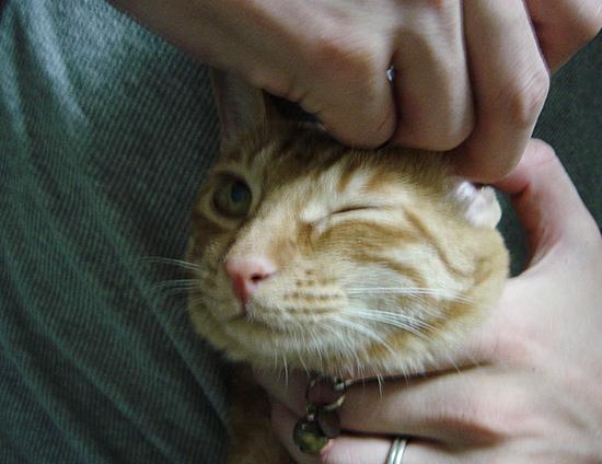 猫の耳掃除