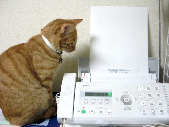 FAXと猫01