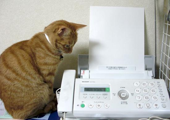 FAXと猫02