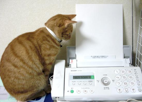 FAXと猫03