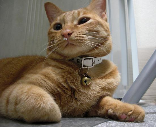 オシャレ番長猫